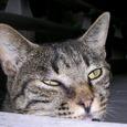 文京区白山の猫