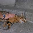 文京区本駒込の猫