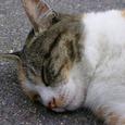 長野市長野の猫