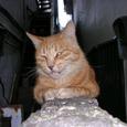 Cat0501