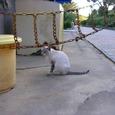 Cat0509