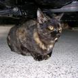 Cat0518