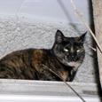 Cat0523