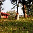 Cat05251